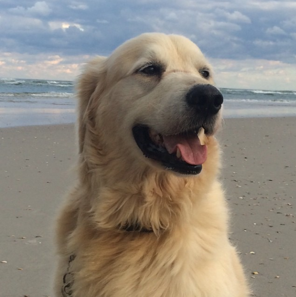 Winston at the beach