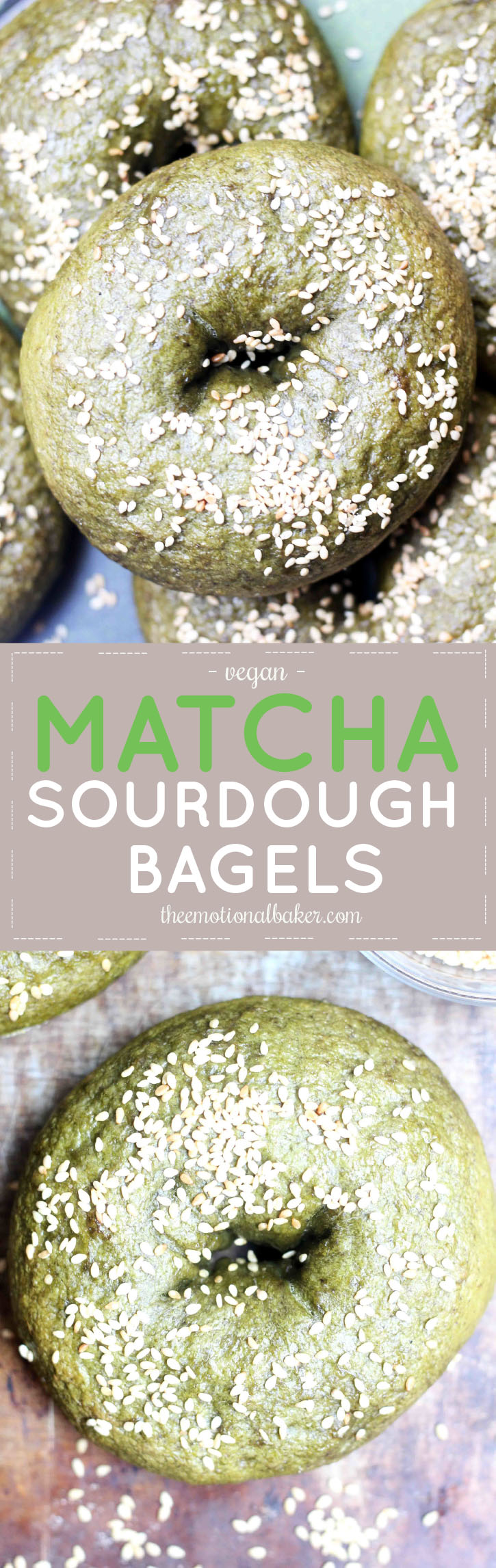 Matcha Sourdough Bagels -- You can make bagels at home! Easy recipe featuring matcha powder and sourdough starter.